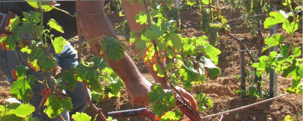 Photos-site-Internet-Reinach-viticulture3